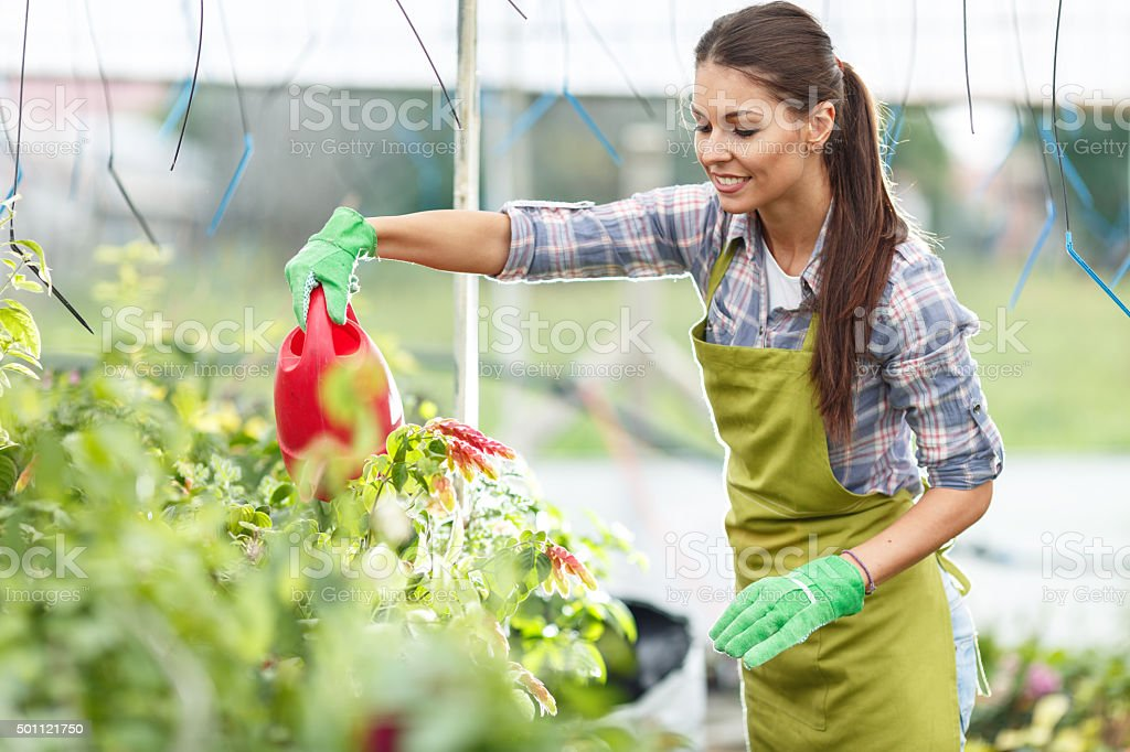 Florist watering plants in her greenhouse. stock photo