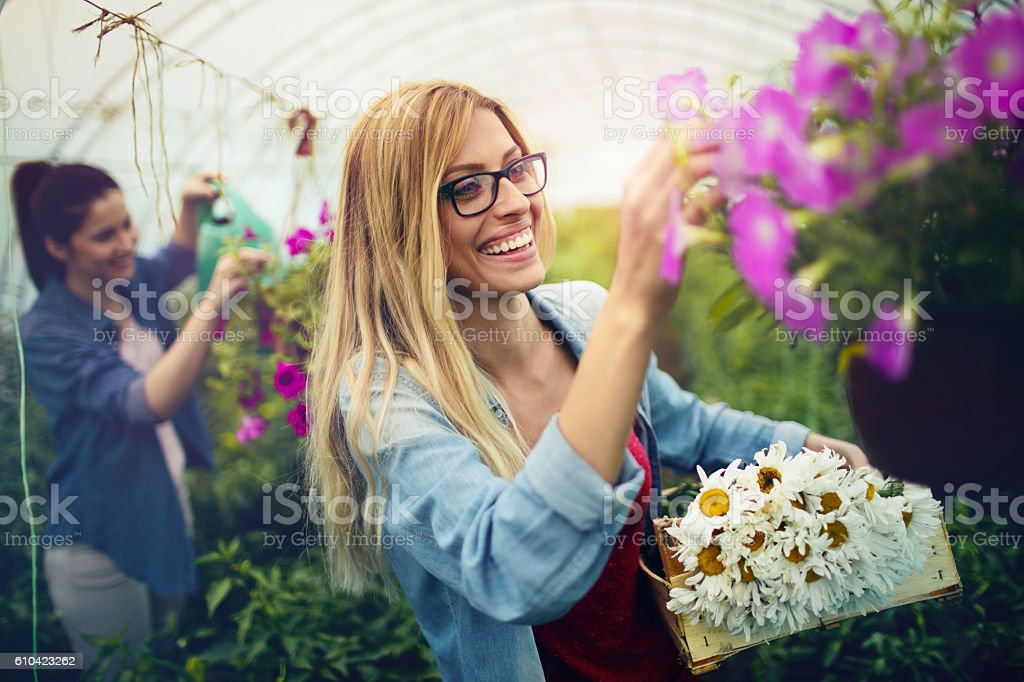 Florists in a greenhouse stock photo