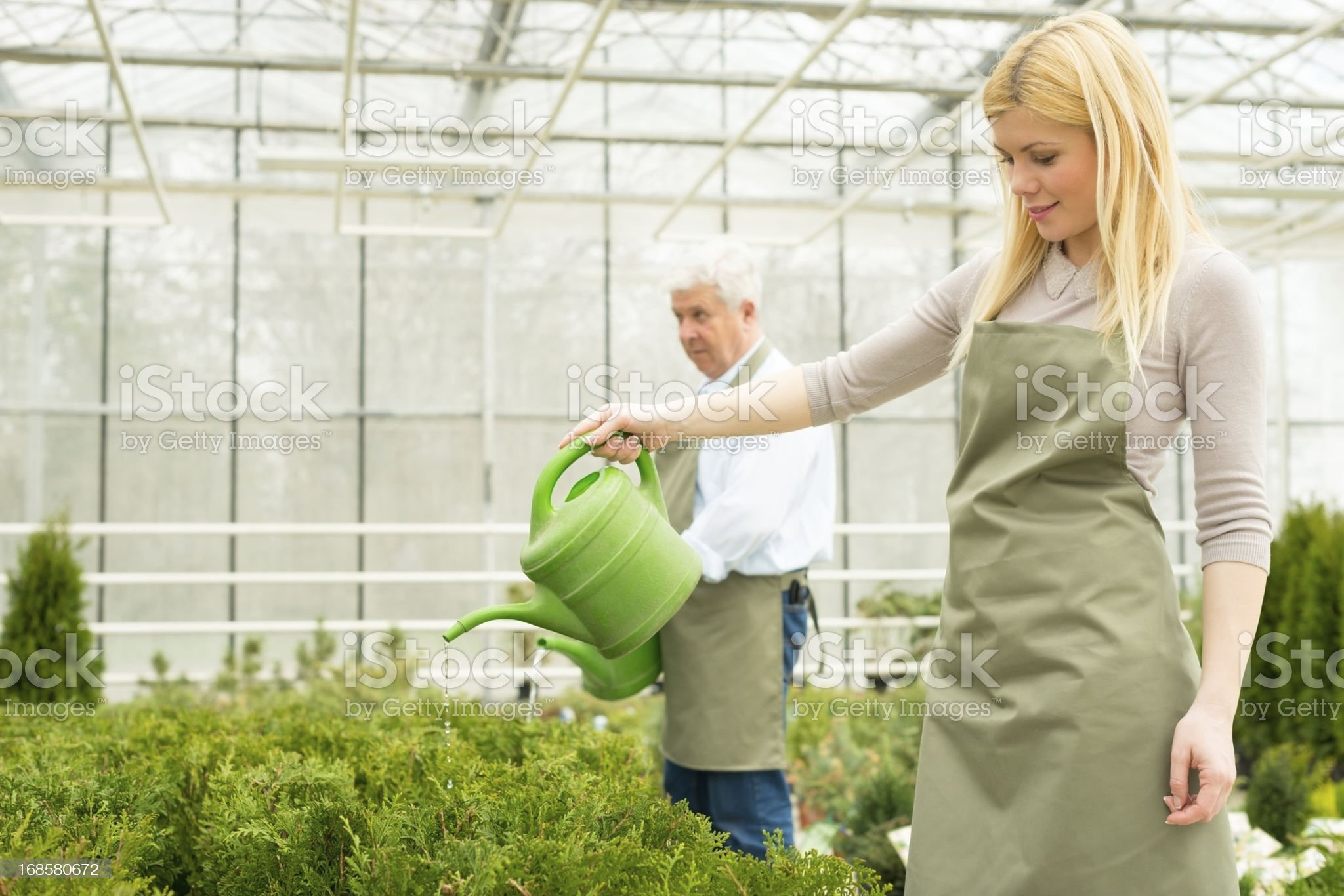 Florists watering flowers in greenhouse royalty-free stock photo