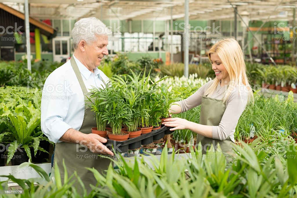 Florists working in greenhouse royalty-free stock photo