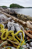 Flotsam on the beach, yellow poly rope and driftwood