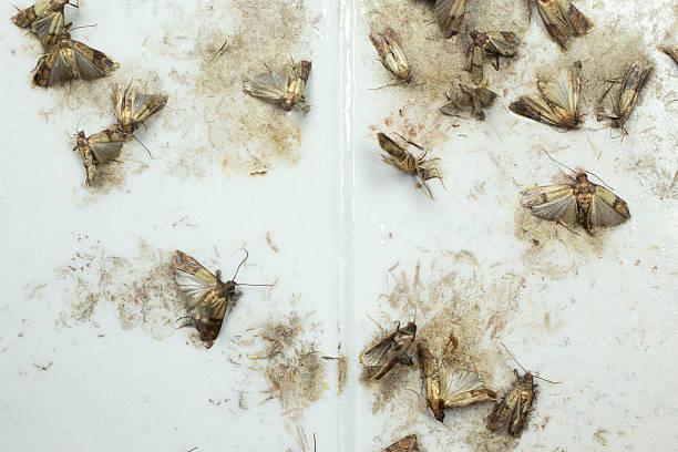 motten in der küche - bilder und stockfotos - istock - Motten In Küche
