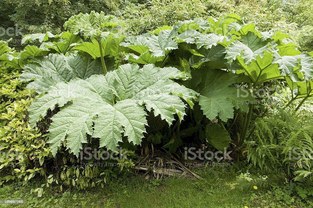 flourish vegetation stock photo