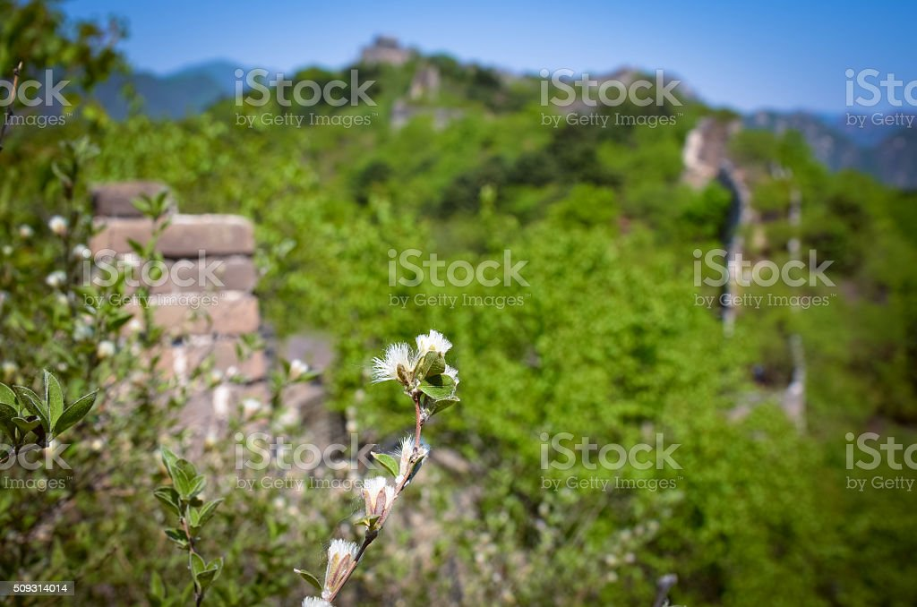 Flower against the background of the Great Wall of China stock photo