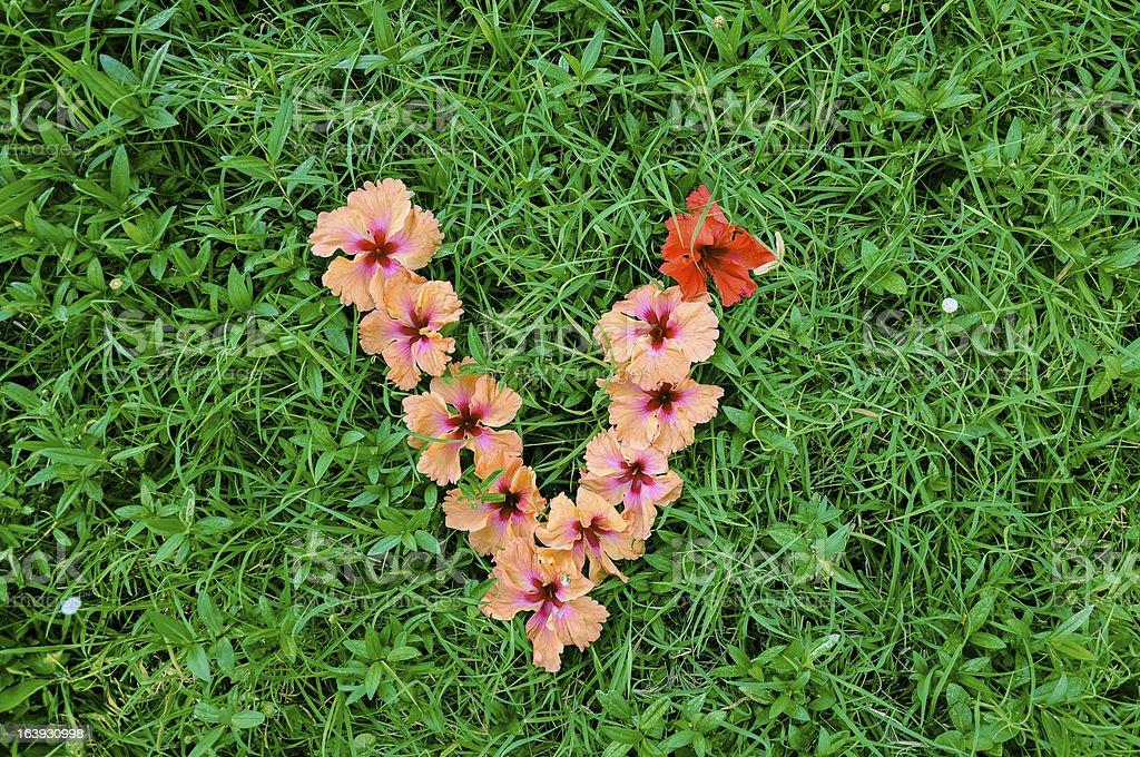 Flower Alphabet: Letter V royalty-free stock photo