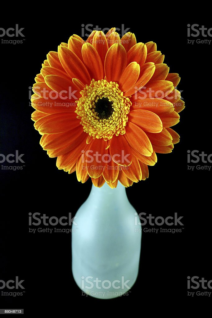 Flower and a bottle royalty-free stock photo