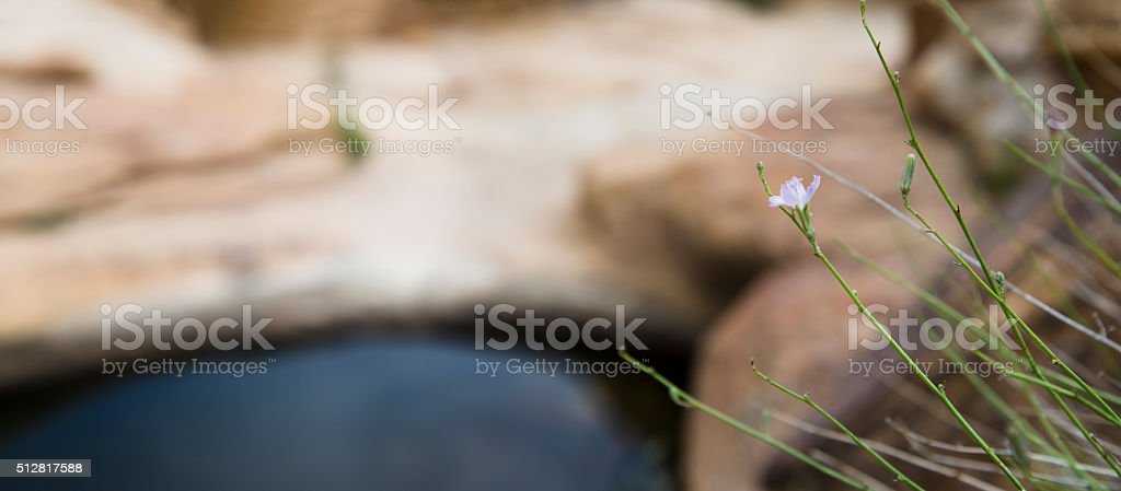 Flower and a Desert Pond stock photo