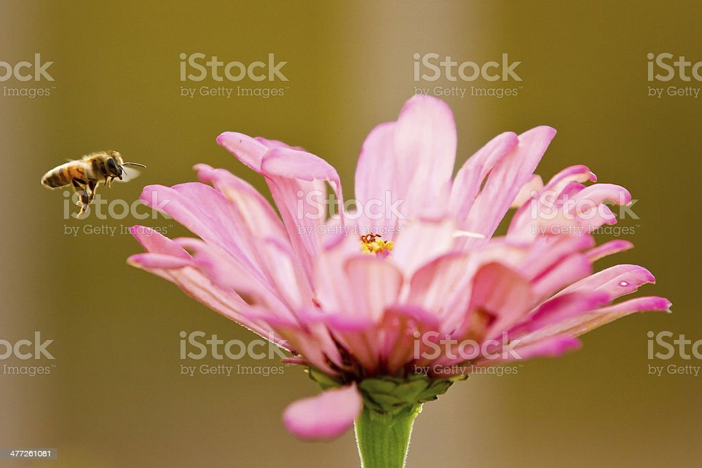 Flower and Bee stock photo