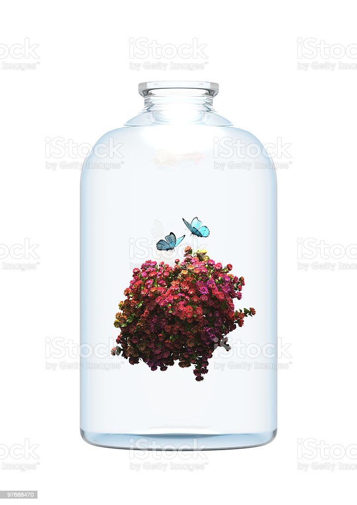 flower and butterfly in the bottle. stock photo