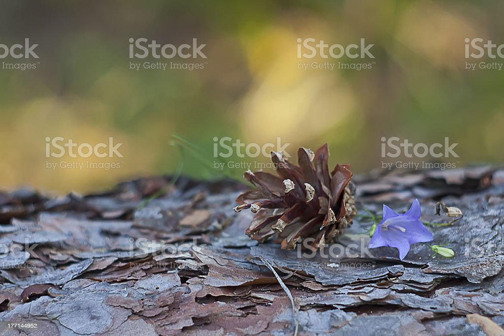 Flower and cone on pine log royalty-free stock photo
