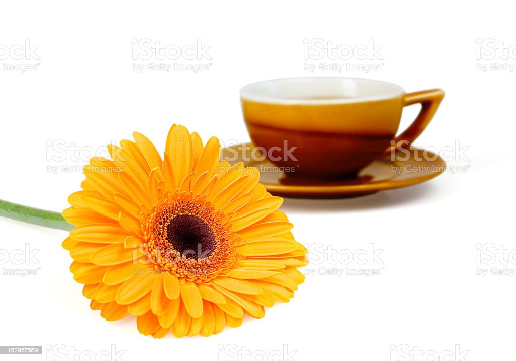 flower and cup of tea royalty-free stock photo