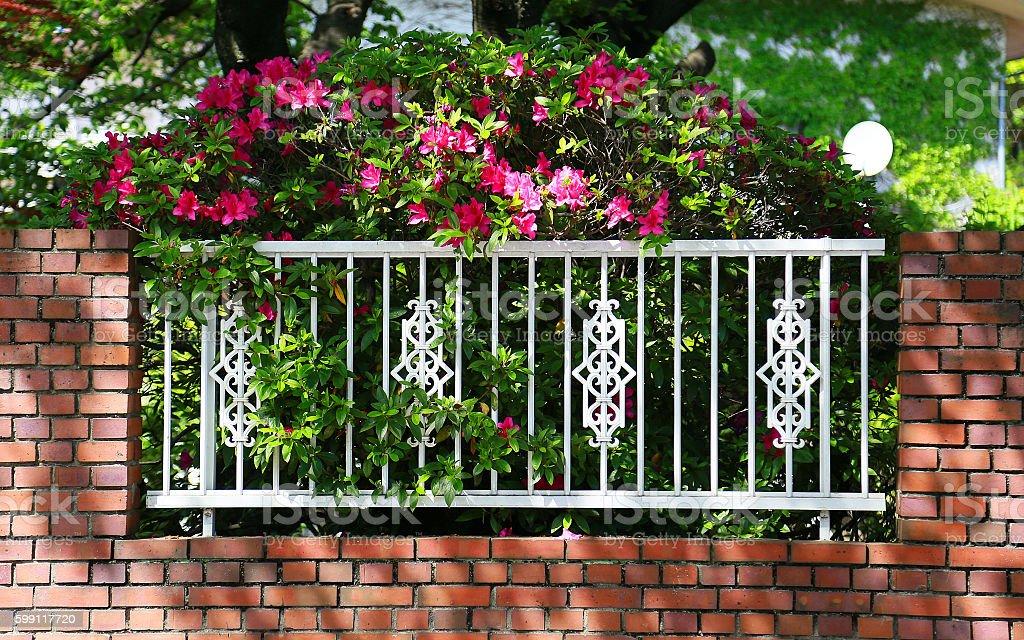 Flor y valla foto de stock libre de derechos