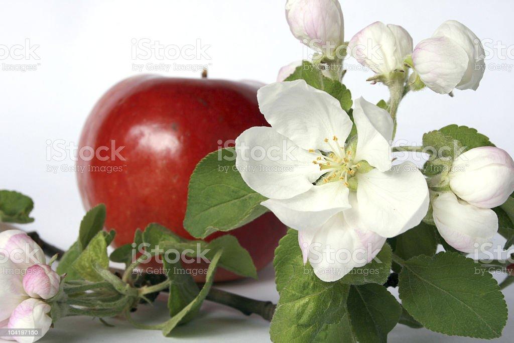 꽃, 과일 royalty-free 스톡 사진