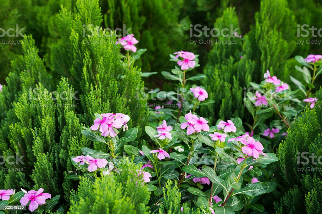 Flower and garden stock photo