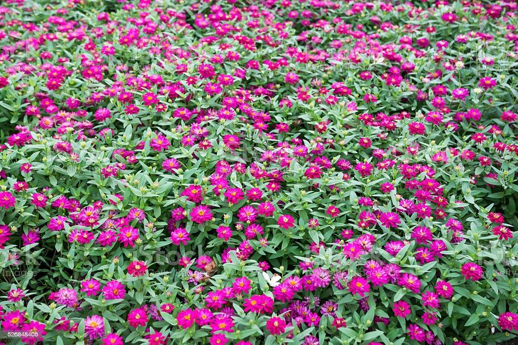 Flower and garden stock photo