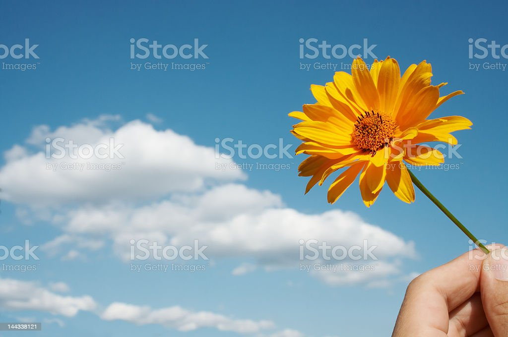 Flower and hand stock photo