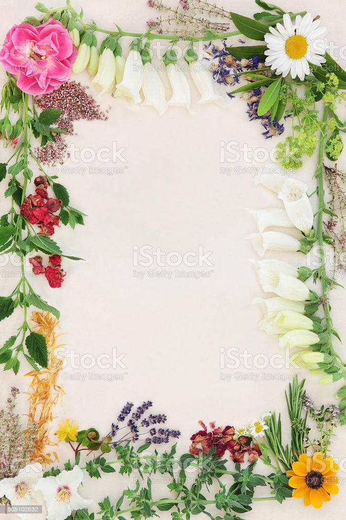 Flower and Herb Medicinal Border stock photo
