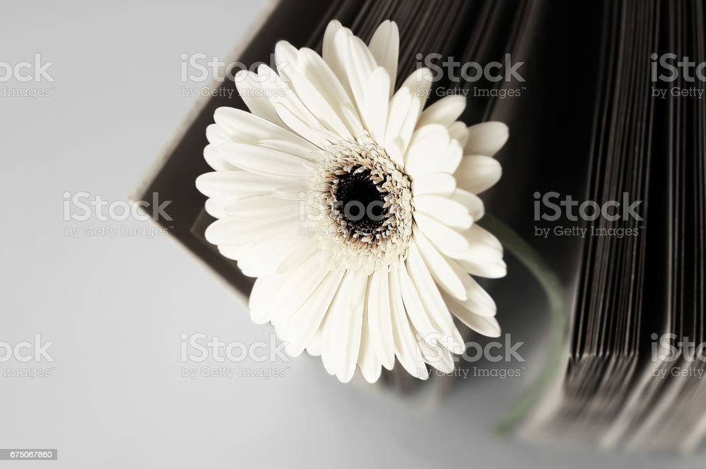 Flower and old blank book or photograph album stock photo