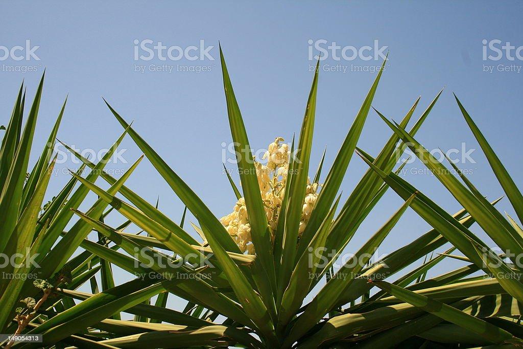 Flor y palm - foto de stock