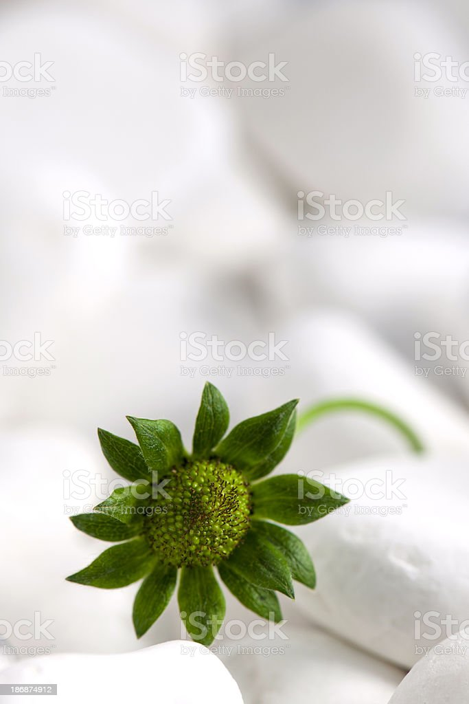 Flower and Pebbles royalty-free stock photo