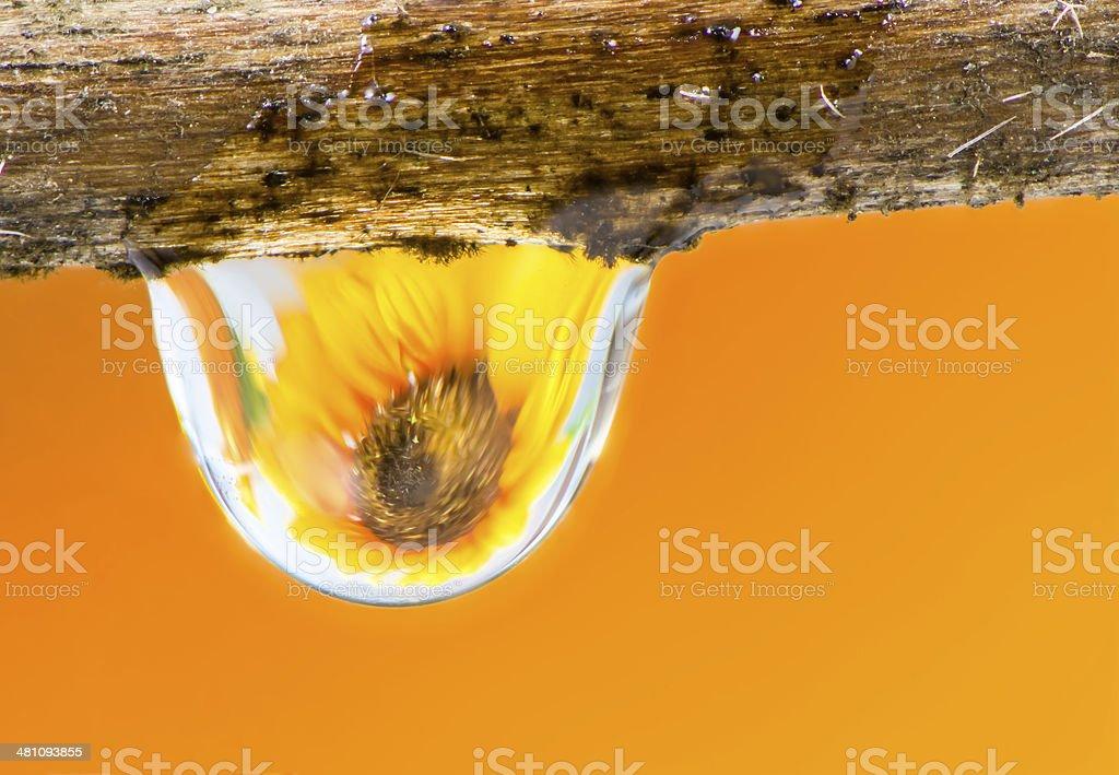 Flower and Raindrop stock photo