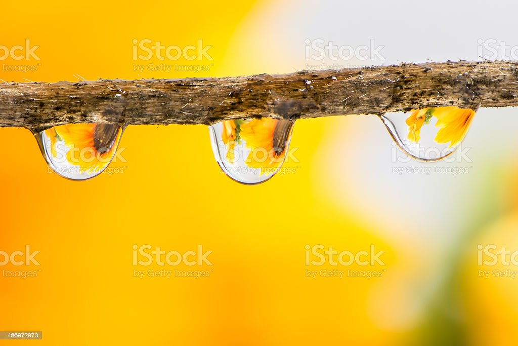 Flower and Raindrops stock photo