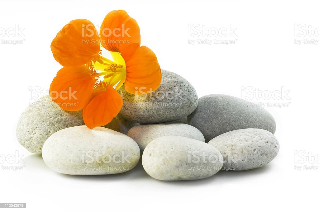 Flower and rocks - spa theme royalty-free stock photo