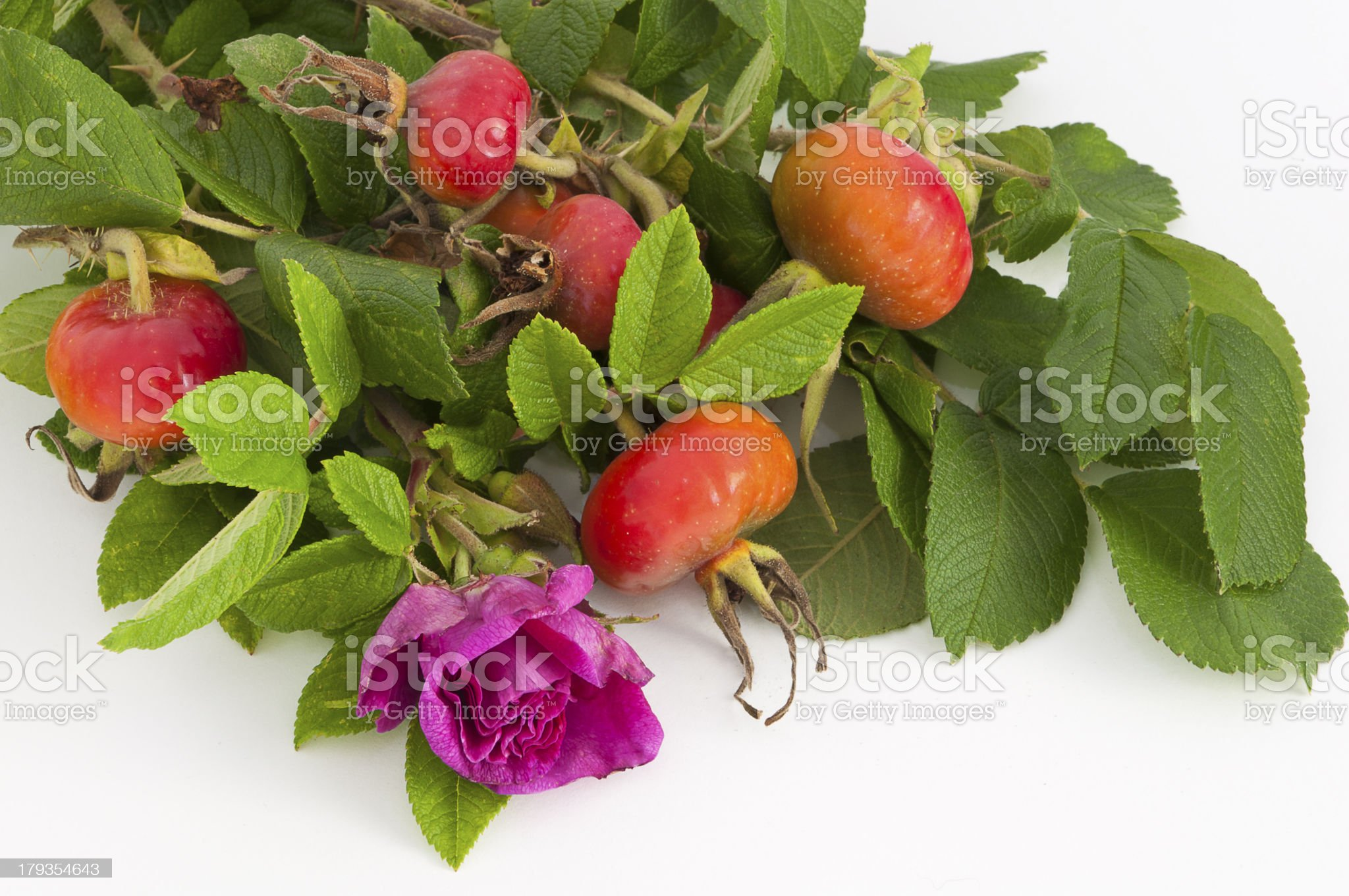 flower and rose hips royalty-free stock photo