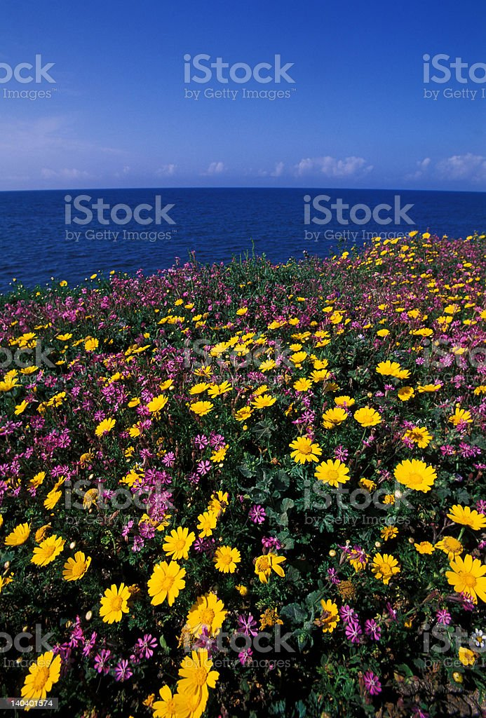 flower and sea royalty-free stock photo