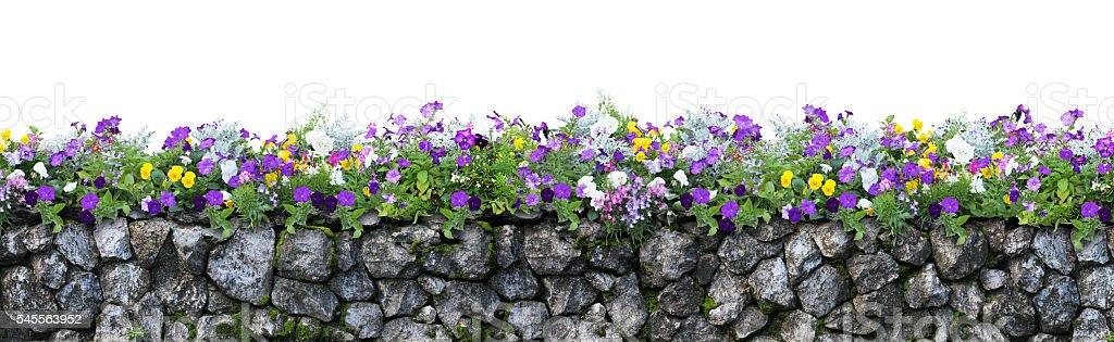 Flower and stone fence isolated on white background stock photo