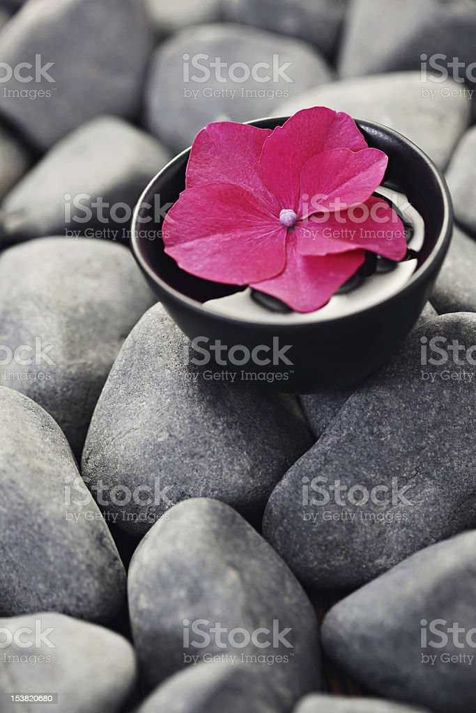flower and stones royalty-free stock photo