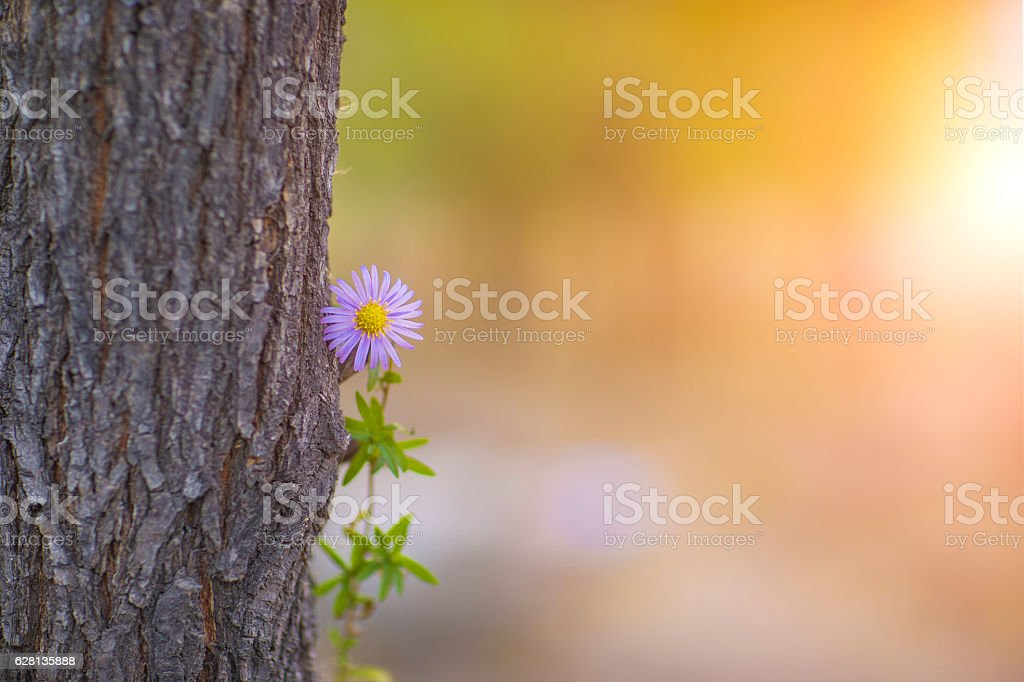 Flower  and trunk background stock photo