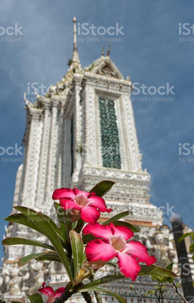 Flower and Wat Arun stock photo