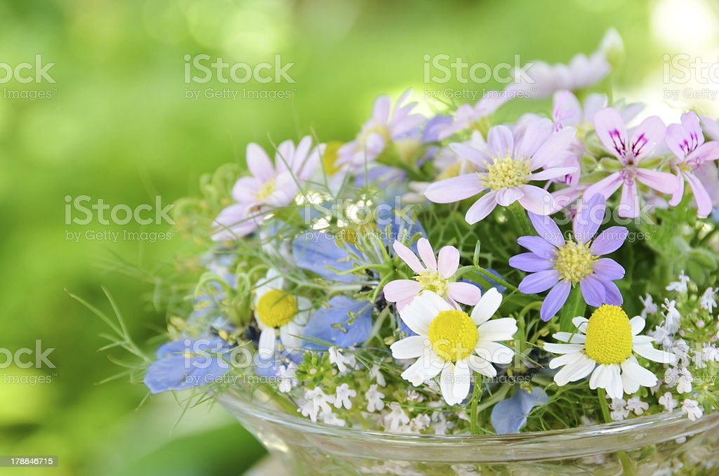 flower arrangement with chamomile royalty-free stock photo