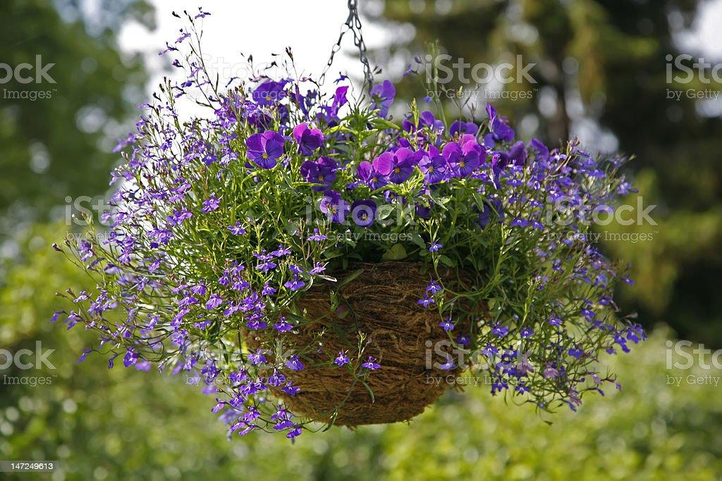 Flower arrangement with lobelia and pansy stock photo