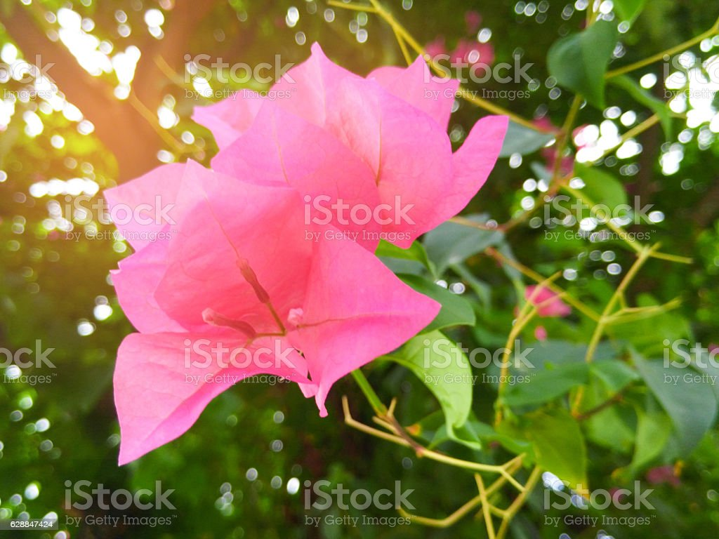 flower at Sunset Blur stock photo