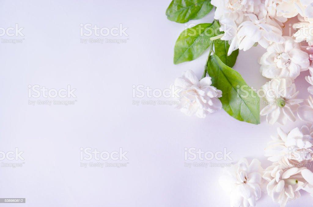 Flower background of Jasmine flowers isolated on white backgroun stock photo