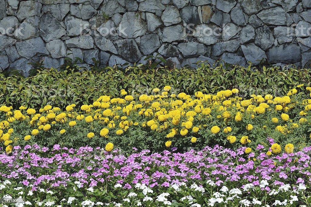 Flower background royalty-free stock photo