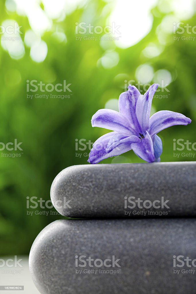 Flower balanced on stones royalty-free stock photo