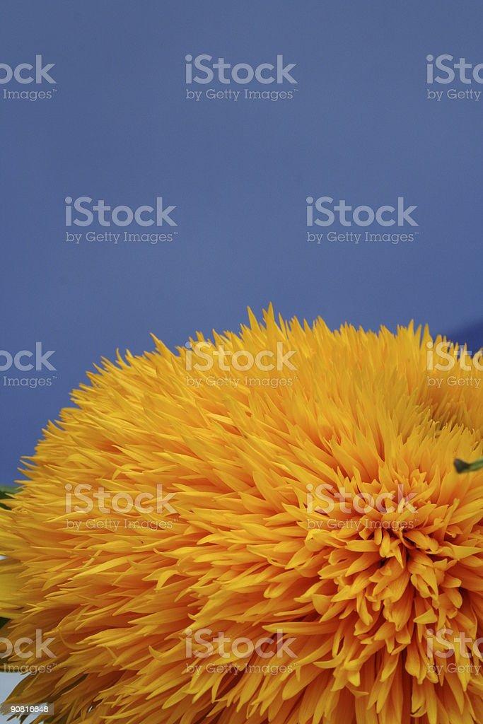 flower ball stock photo