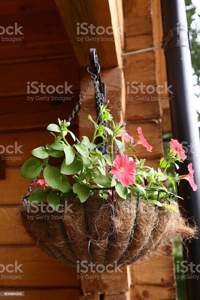 flower basket hang close up photo stock photo