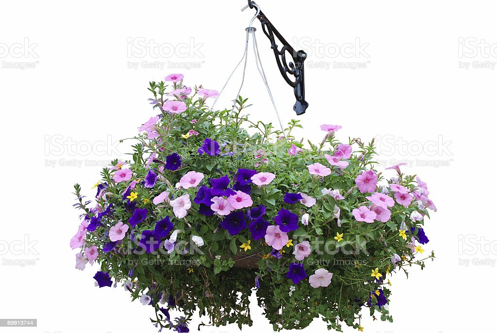 Flower basket stock photo