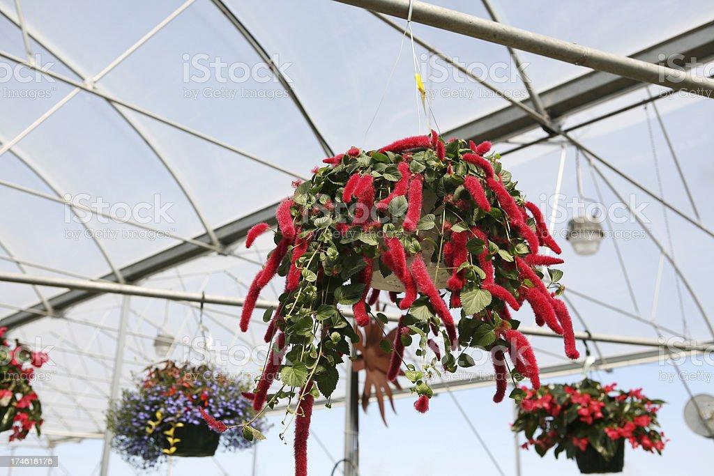Flower baskets royalty-free stock photo