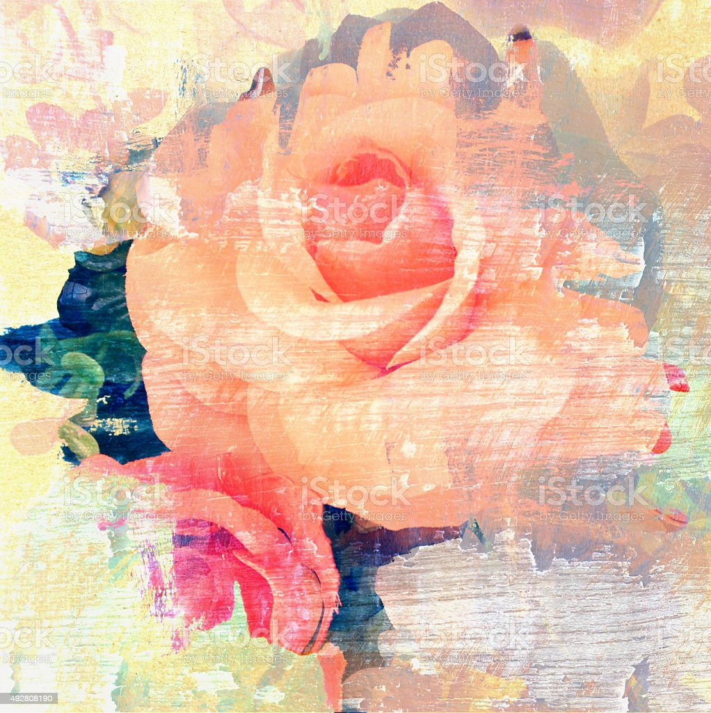 Flower beautiful rose, art paint illustration for background stock photo