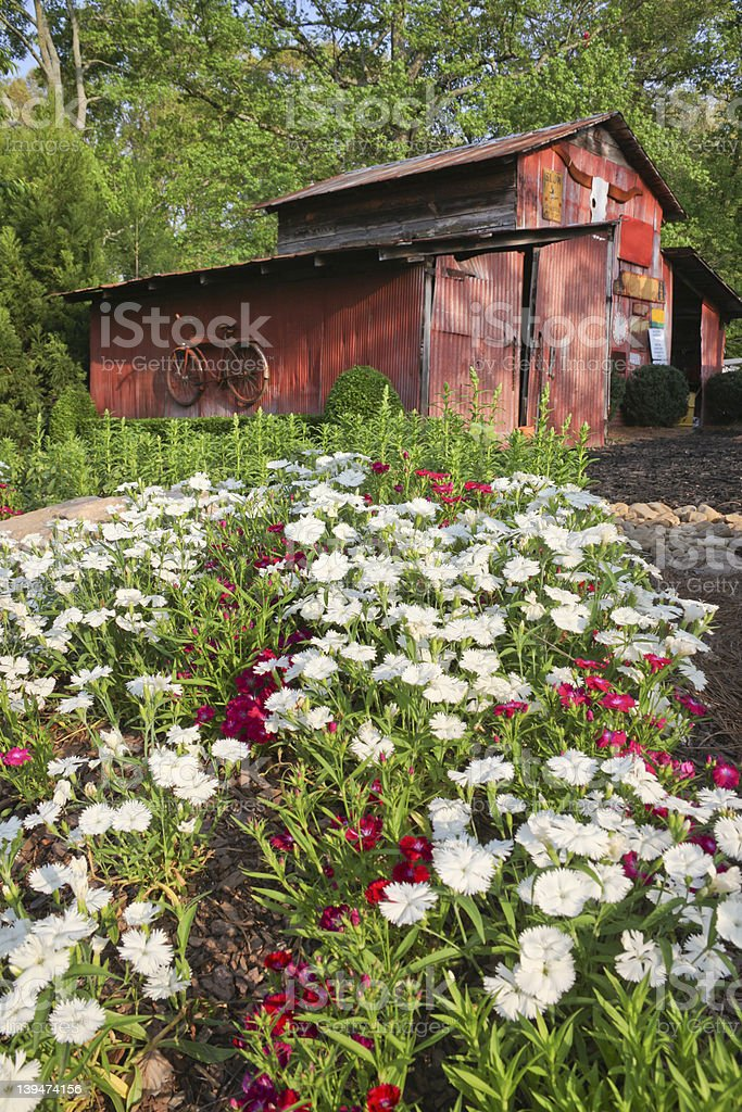 Flower Bed and Old Red Tin Shed royalty-free stock photo