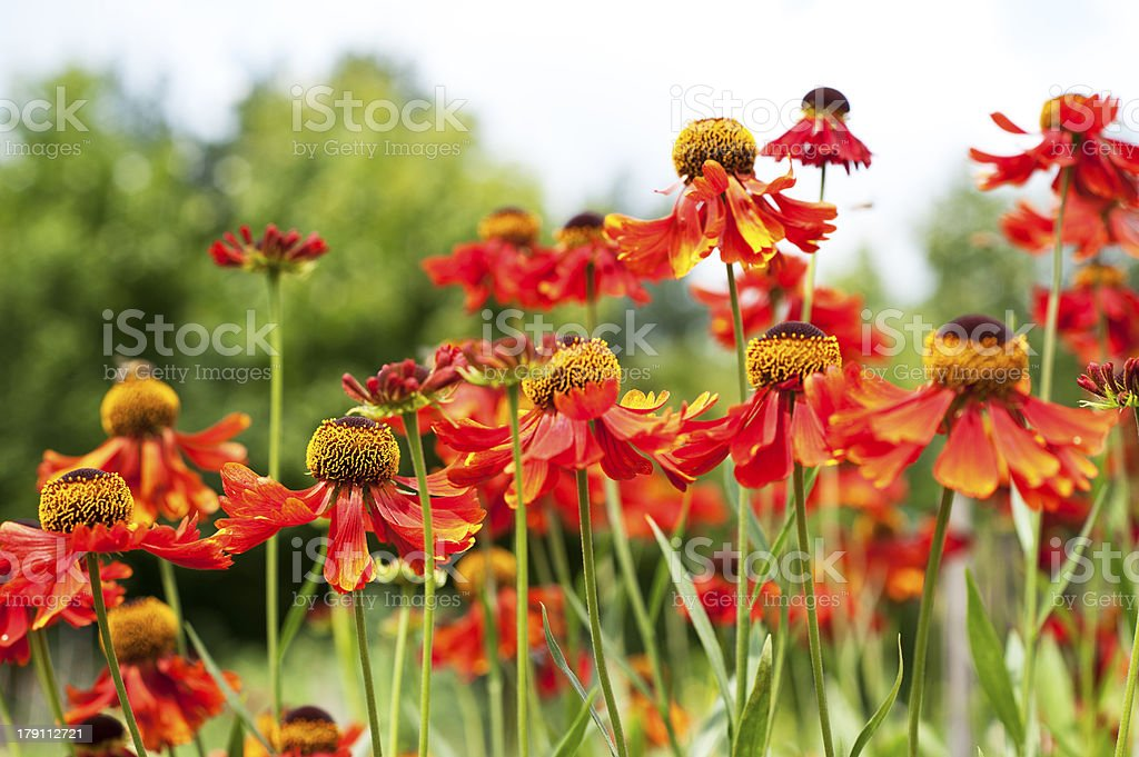 Flower bed coloring red and orange royalty-free stock photo