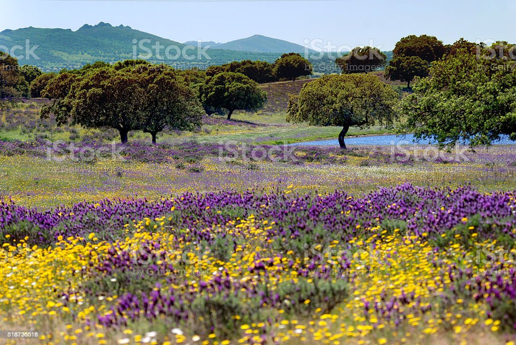 Flower bed in a Spanish landscape stock photo
