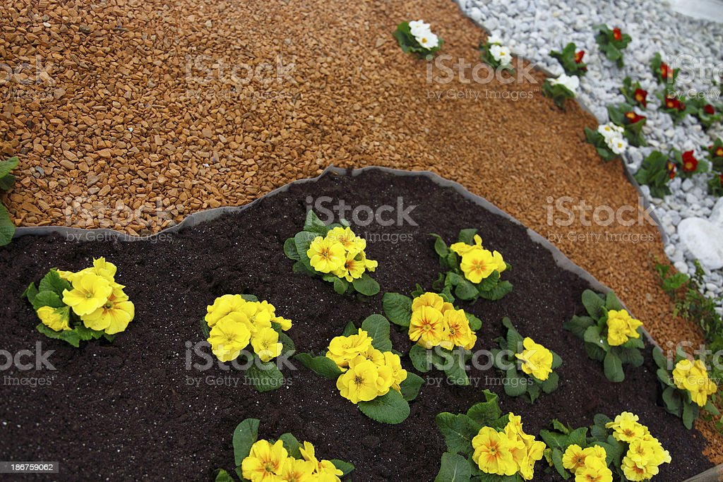 Flower bed in bloom royalty-free stock photo
