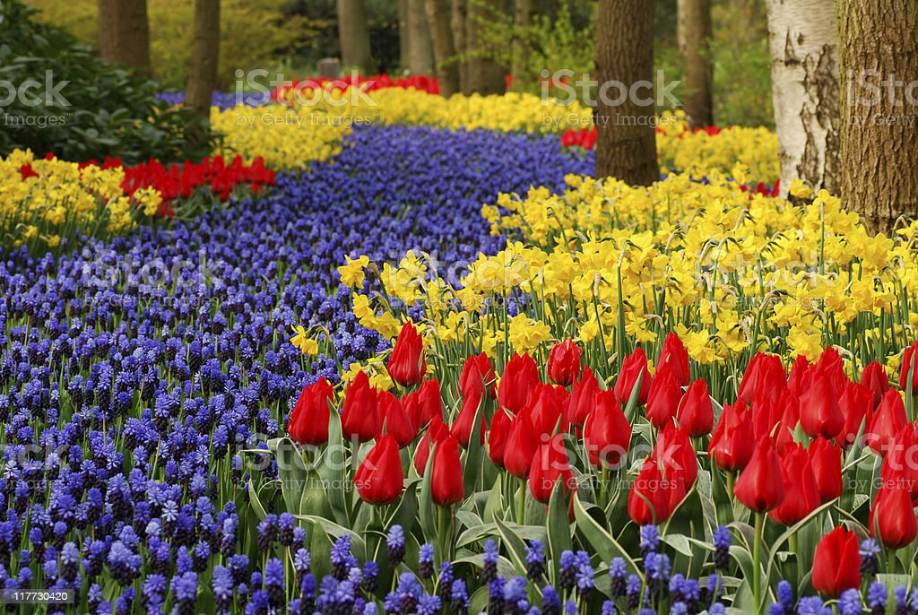 Flower bed in springtime royalty-free stock photo