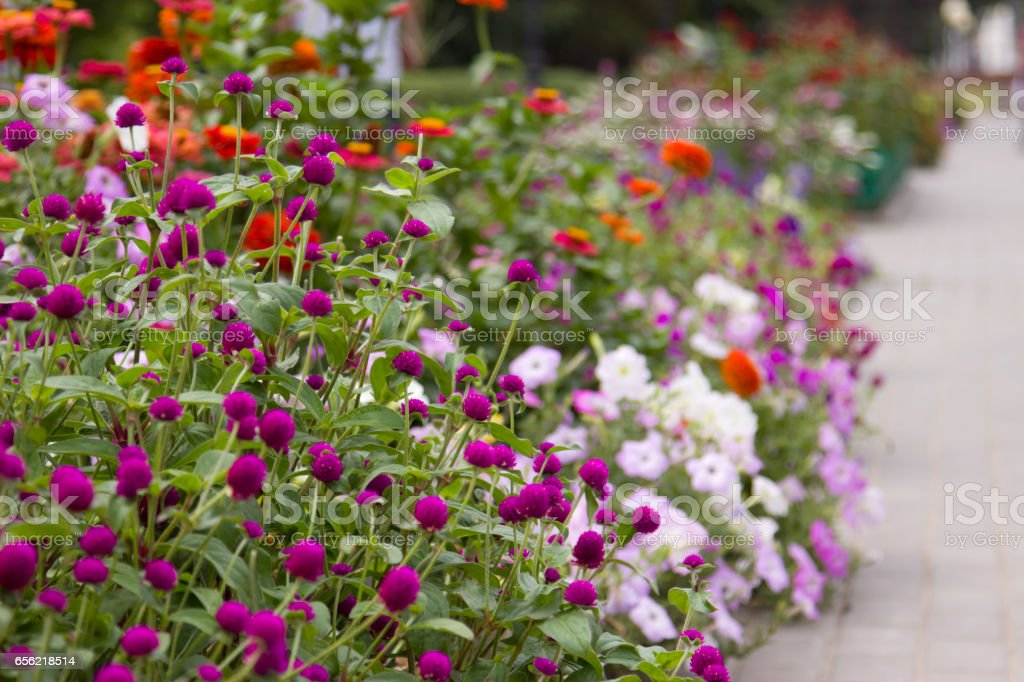 Flower bed in the park stock photo